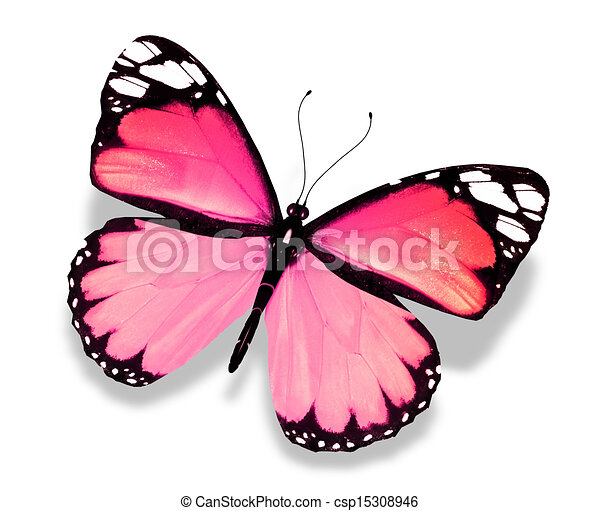 Drawing of Pink butterfly, isolated on white background ...