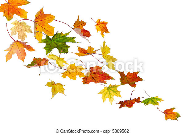 Autumn colored leaves falling - csp15309562