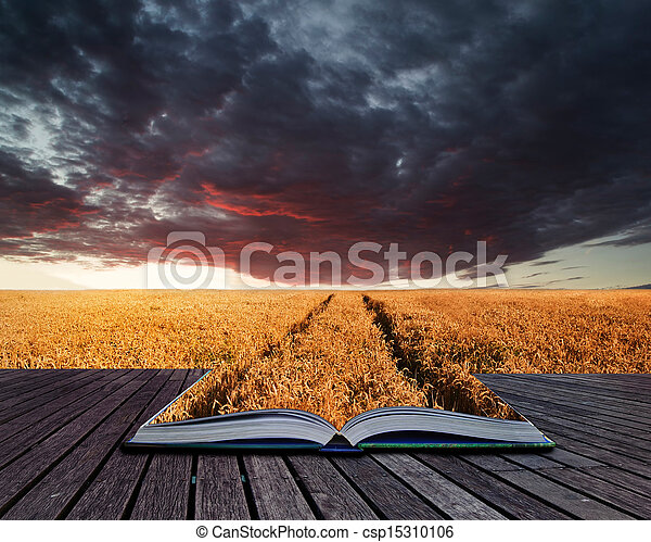 Creative concept pages of book Beautiful image of wheatfield Summer sunset landscape under stormy sky - csp15310106