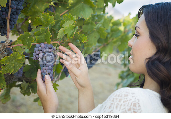 Young Adult Woman Enjoying The Wine Grapes in The Vineyard - csp15319864