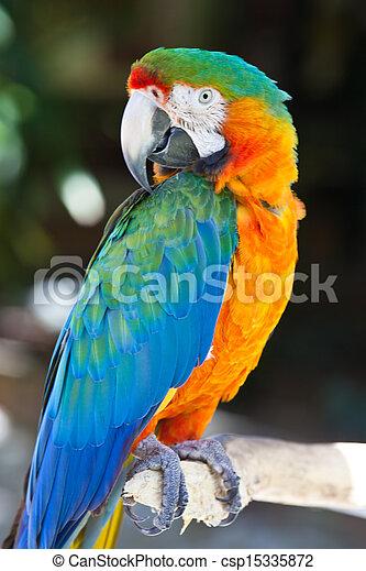 image de bleu macaw jaune perroquet oiseau color perroquet csp15335872 recherchez. Black Bedroom Furniture Sets. Home Design Ideas