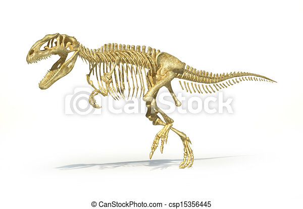 Gigantosaurus dinosaurus full photo-realistic skeleton, scientifically correct. Perspective view, On white background. - csp15356445