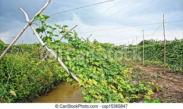 Photo de jardin melon treillis vert feuilles melon - Comment congeler des haricots verts frais du jardin ...
