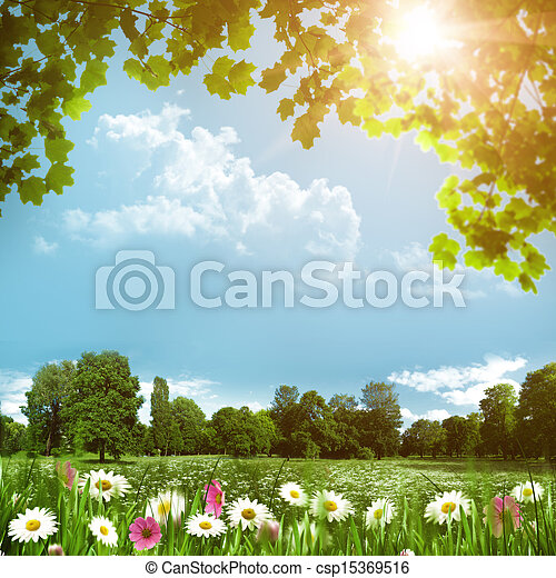 Beauty meadow with daisy flowers, abstract natural backgrounds - csp15369516