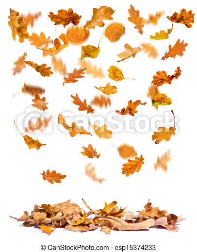 Drawings of Autumn oak leaves falling - Oak autumn leaves falling to ...
