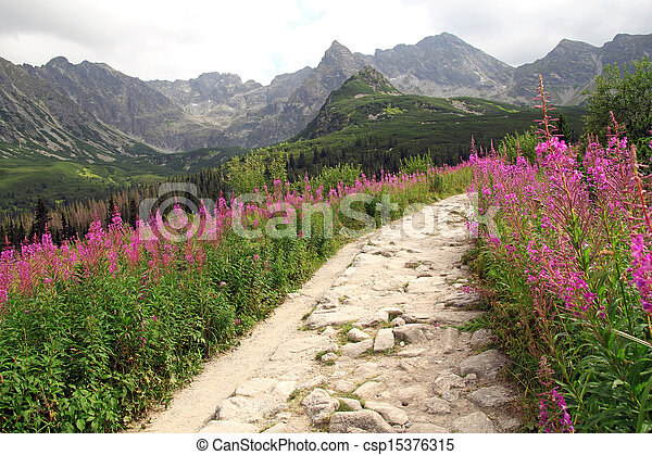 beautiful view on hiking path in Tatra Mountains in Poland - csp15376315