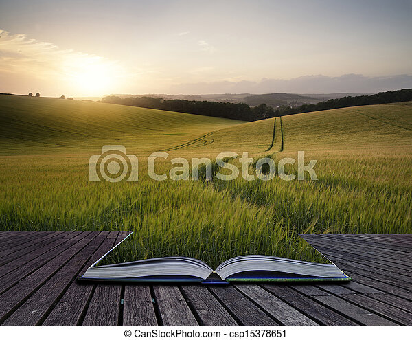 Creative concept pages of book Beautiful Summer landscape of field of growing wheat crop during sunset - csp15378651