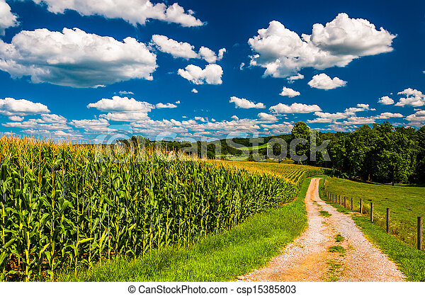 Cornfield and driveway to a farm in rural Southern York County, Pennsylvania. - csp15385803