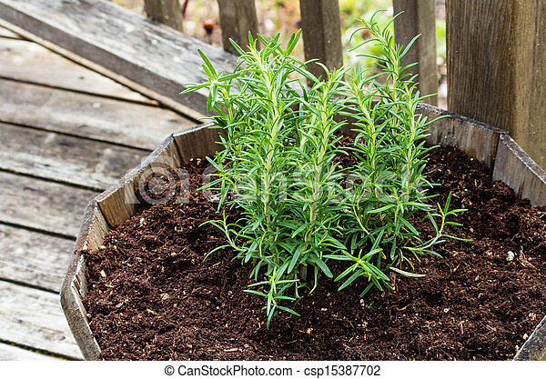 Herb plants grown in a wooden container