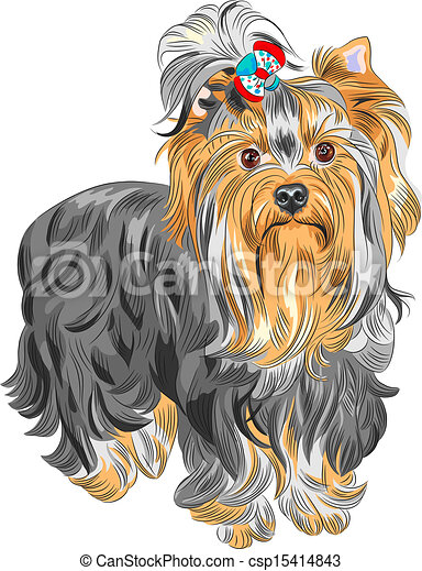 Yorkshire terrier Clip Art Vector and Illustration. 242 Yorkshire ...