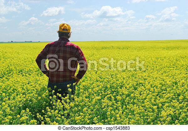 Farmer Inspecting Canola Crop - csp1543883