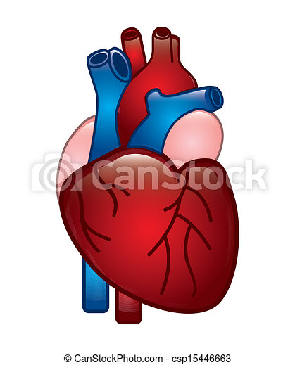 Clip Art Vector of human heart design over white ...
