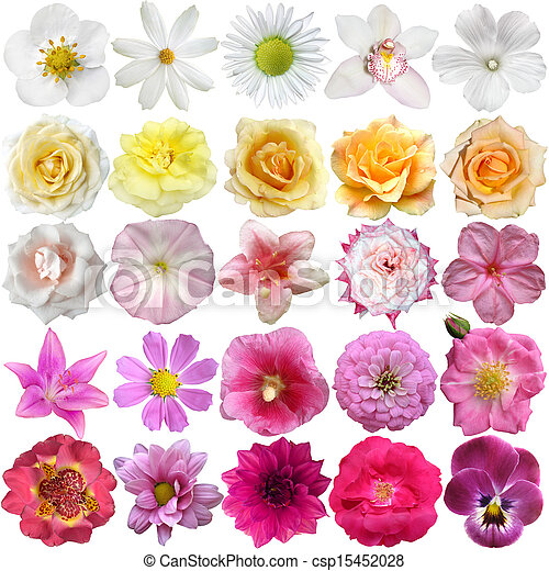 Big Selection of Various Flowers Isolated on White Background - csp15452028