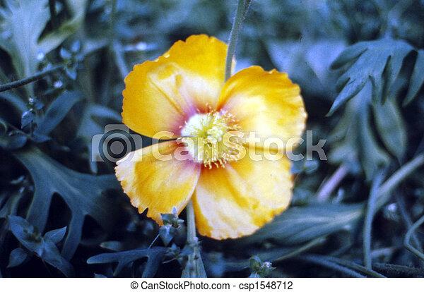 Garden Flower (Yellowish)  H-1910 - csp1548712