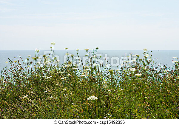 field flowers by the lake - csp15492336
