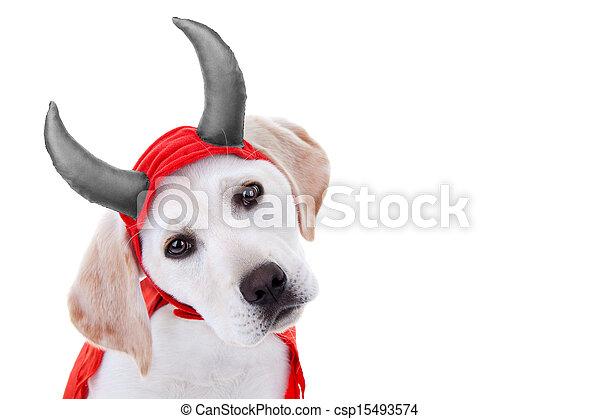 Photo halloween chien d guisement image images photo libre de droits photos sous - Deguisement halloween chien ...