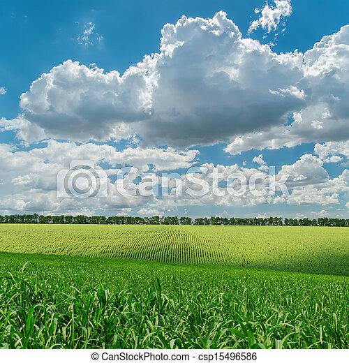 himmelsgewölbe, bewölkt , feld, grün, unter, landwirtschaft - csp15496586