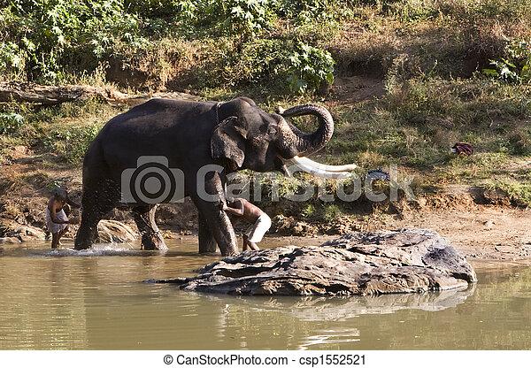 tierwelt, bekommen, mudhumalai, bad, indischer elefant, reserv - csp1552521