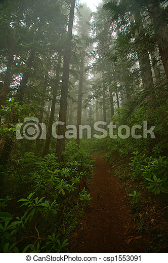 Pacific Northwest Forest - csp1553091