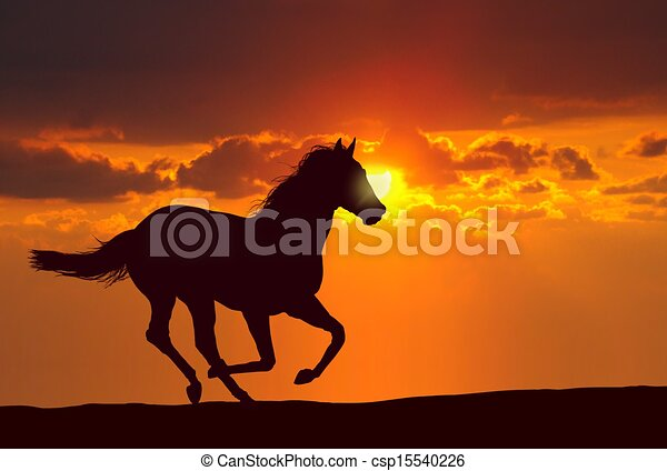 Horse Running at Sunset - csp15540226