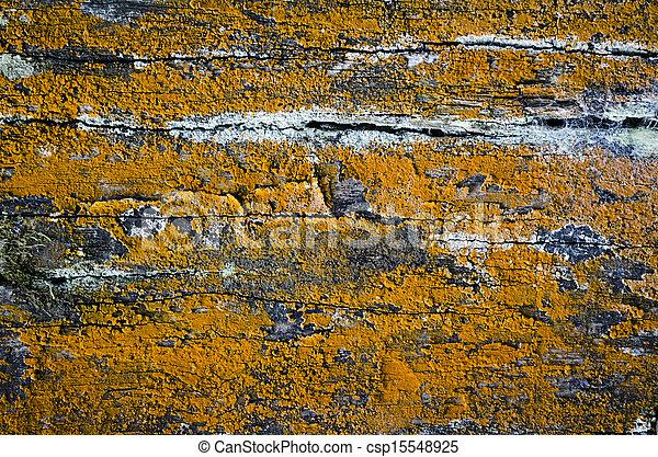 Photo de moisissure bois jaune jaune moisissure sur for Moisissure fenetre bois