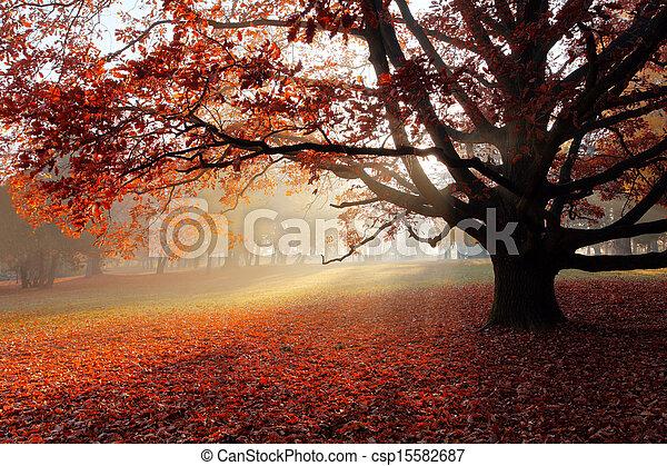 Alone tree in Autumn park - csp15582687