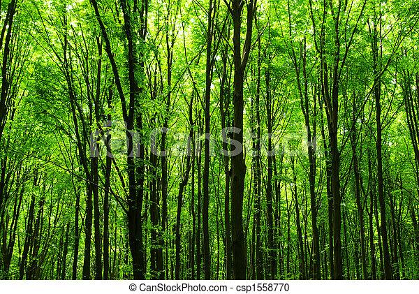 forest - csp1558770
