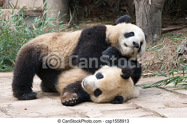What Is A Panda's Fighting Strategy? - Lessons - Tes Teach