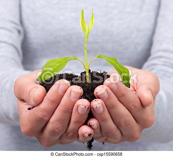 Woman hands with green plant. - csp15590658