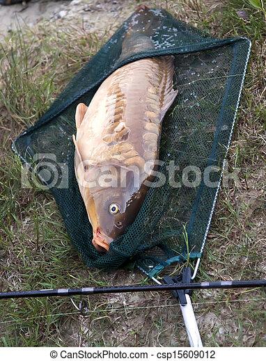 Fishing a big carp at the lake - csp15609012
