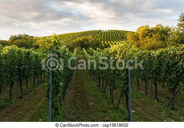 Stuttgart, Wino, Niemcy, pola - csp15618632