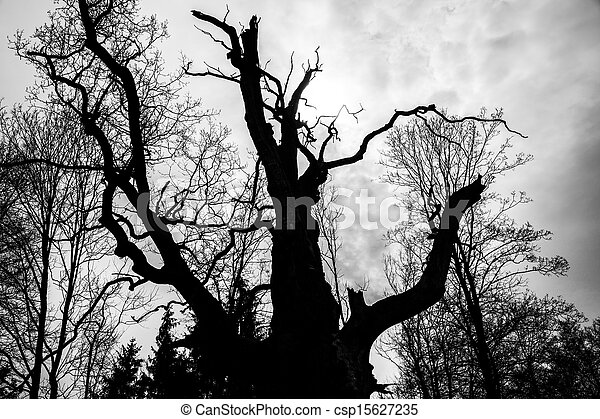 black and white  silhouette of tree detail-view - csp15627235