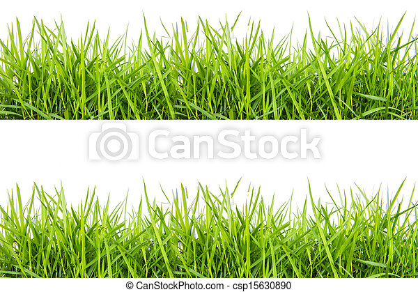 fresh green grass isolated on white - csp15630890