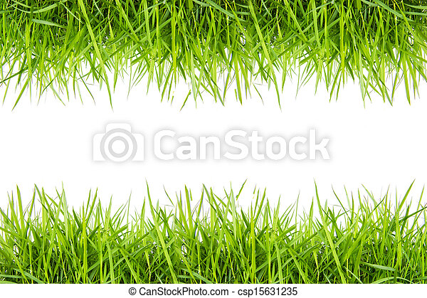 fresh green grass isolated on white - csp15631235
