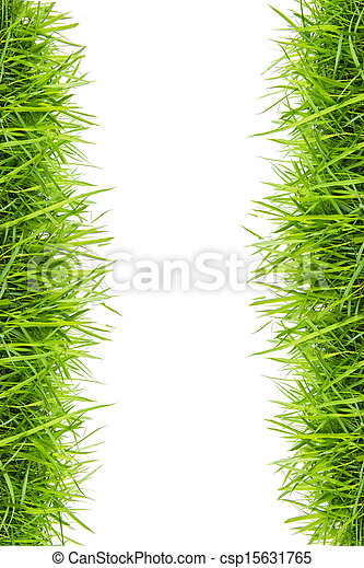 fresh green grass isolated on white - csp15631765