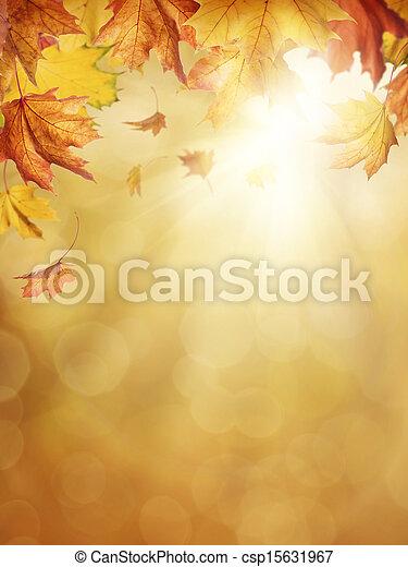 otoño, hojas - csp15631967