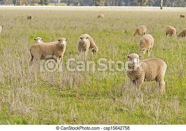 mammal - csp15642758