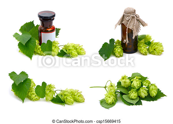 Hop plant and pharmaceutical bottles. - csp15669415