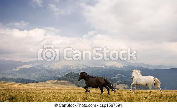 pferden, zwei - csp1567591