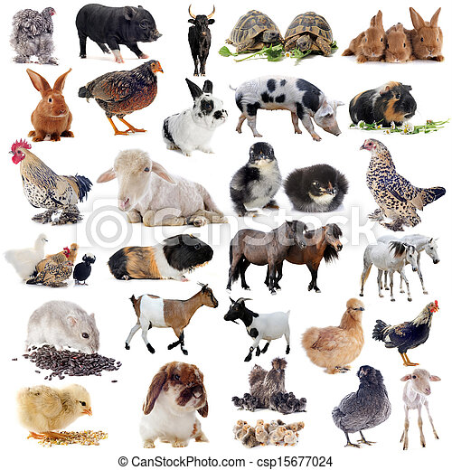 農場, 動物 - csp15677024