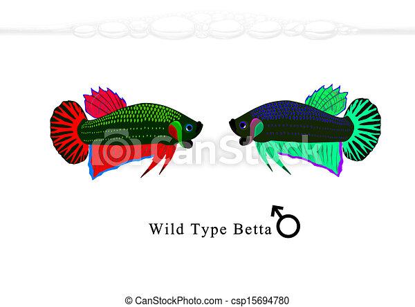 Wild Betta For Sale Wild Type Betta Csp15694780