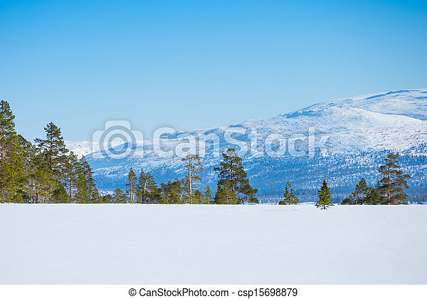 scenery with untouched snow, pines, firs and a mountain - csp15698879
