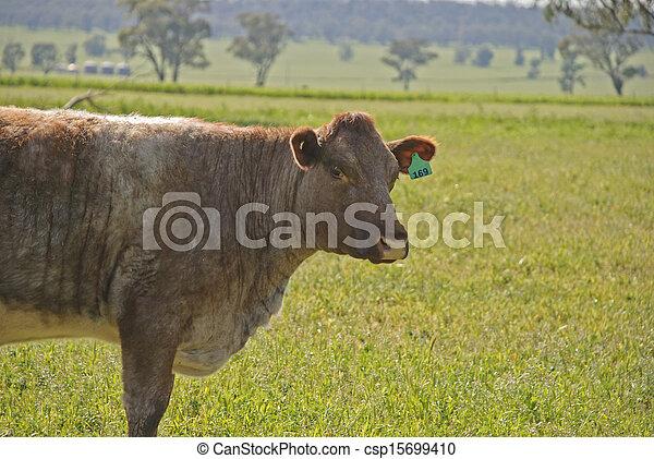 mammal - csp15699410