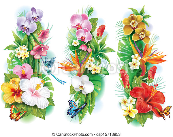 Clipart Vektor Von Anordnung Tropische Blumen Bltter Csp15713953