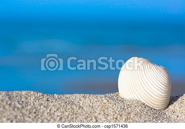 Shell on the beach - csp1571436