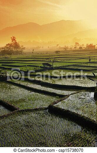 Agriculture rice field Landscape - csp15738070