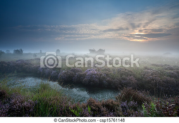 misty sunrise over swamp with flowering heather - csp15761148