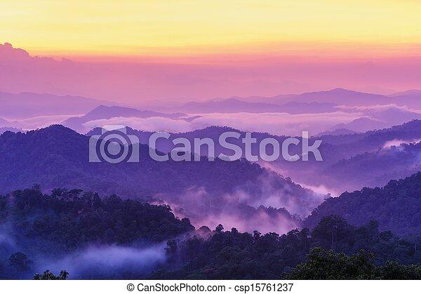 Beautiful twilight landscape in rain forest.