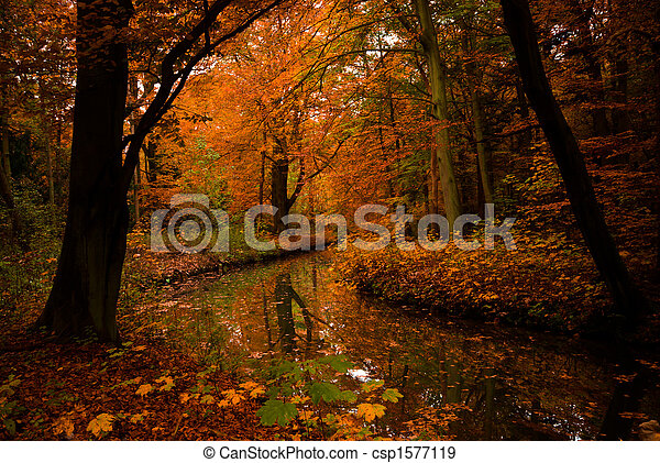autumn colors in the forest - csp1577119