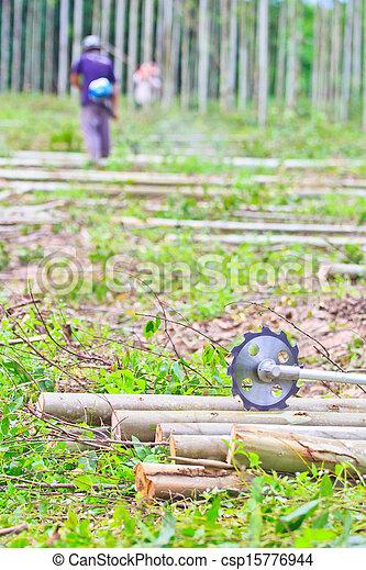 Photo de eucalyptus coupure machine bois scier scie saw csp15776944 recherchez des - Machine a couper le bois ...